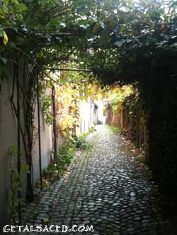 cobblestone alleyway with vines crossing it