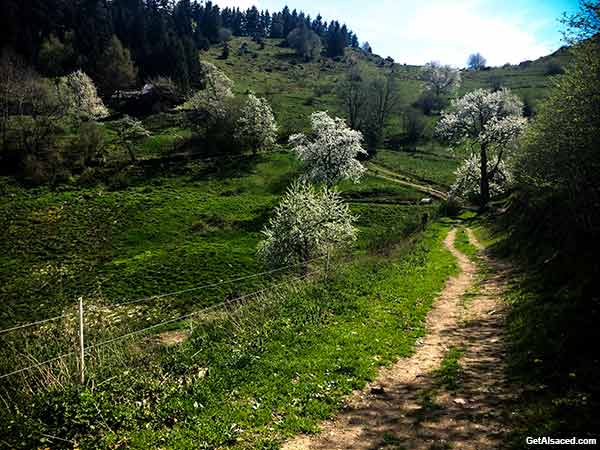 Alsace Vacation in Spring