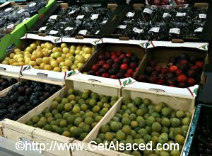 Plum Varieties in Alsace France
