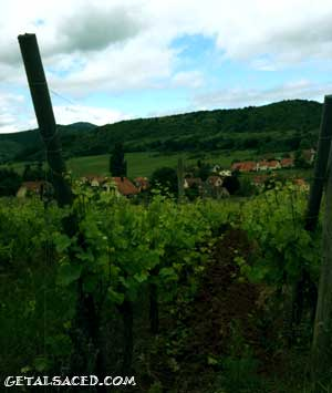 vineyards in Alsace with village in the background