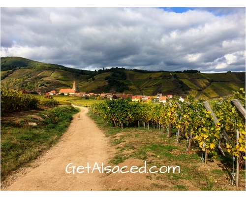 vineyards with dirt path and alsatian village in the distance