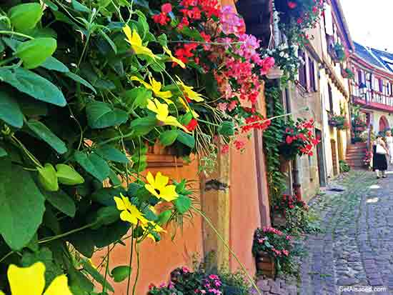 Alsace village houses and flowers in Eguisheim in France
