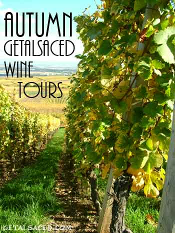 autumn vineyards getalsaced wine tours