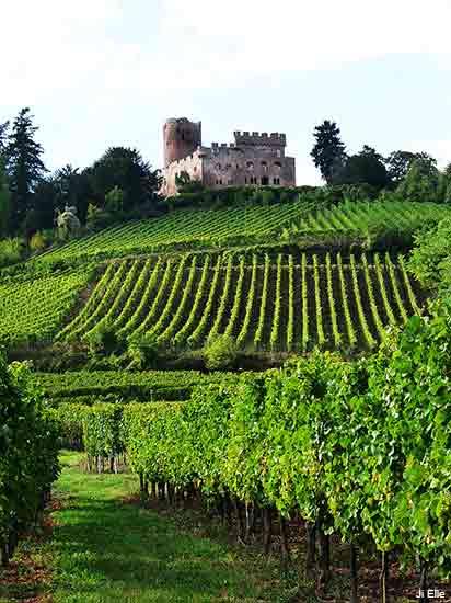 castle near Kintzheim on the Alsace wine road in France